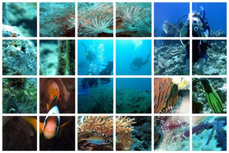 Beautiful views of divers and underwater life on a huge lattice collage
