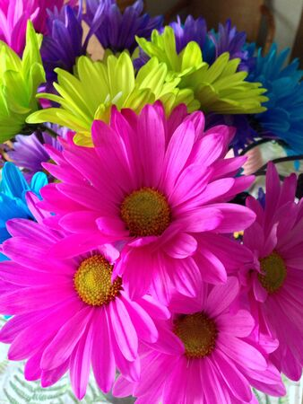 daisies Zdjęcie Seryjne - 21390007