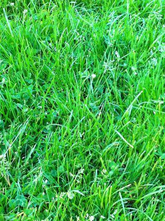 Green lawn Zdjęcie Seryjne - 21398102