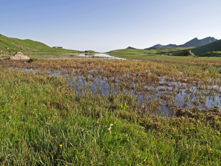 swampland: Alpine swampland