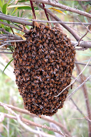 stinger: Bee Hive