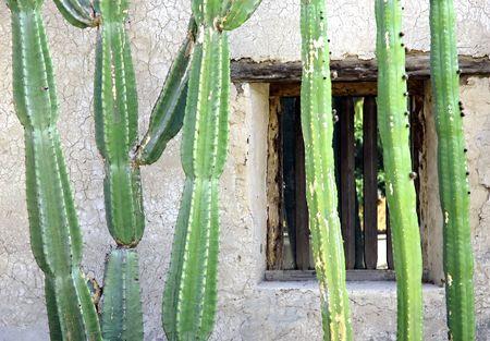 adobe wall: Cactus di Adobe contro muro con finestra Archivio Fotografico