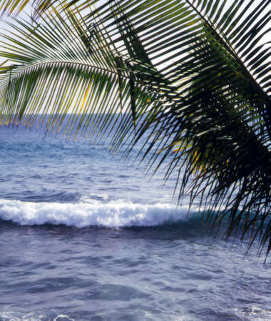 Palm Fronds & Waves Hawaii