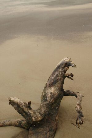 Driftwood Log on sandy beach Reklamní fotografie