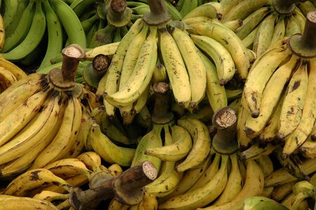 plantain: Plantain bunches at open air market