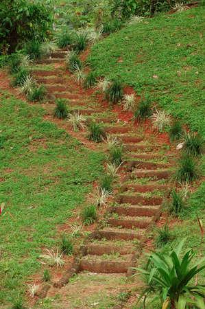 トロピカル ガーデンの階段 写真素材 - 536842