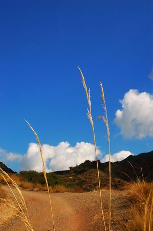 Hiking trail with grass stalks & blue sky with clouds