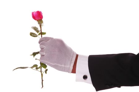 gloved: Gloved Hand Giving Pink Rose isolated over white