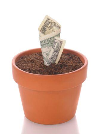retour: Dollar biljet in een bloem pot. Bill lijkt alsof het een seeding begint te ontkiemen. Verticale indeling geïsoleerd op wit met reflectie.  Stockfoto
