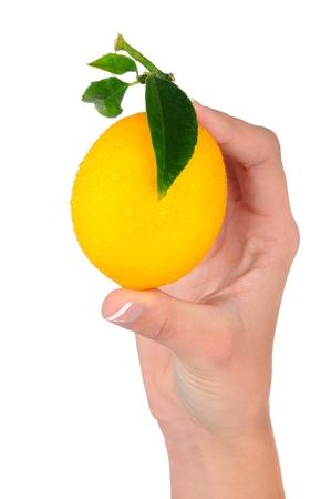 Closeup of a woman hand holding fresh picked lemon Stock Photo - 11965194