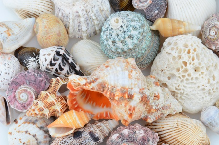 marinelife: Closeup of a group of seashells. Many different varieties.