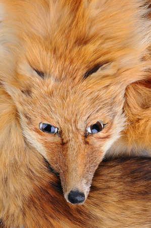 stole: Closeup of an antique fox stole.
