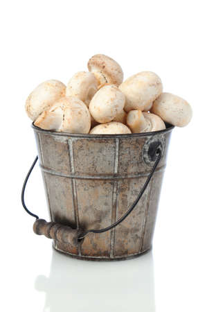 Fresh picked mushrooms in an old metal bucket over a white background with slight reflection. Stock Photo - 13996420