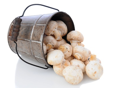 Fresh picked mushrooms spilling from a bucket laying on its side over a white background. Stock Photo - 13996416