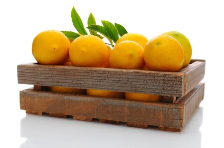 Fresh picked lemons in a wooden shipping crate with dew drops Stock Photo - 14167367