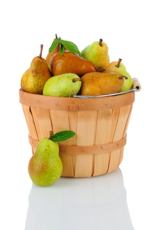 A basket full of fresh picked Bartlett and Bosc Pears. Vertical format over a white background with reflection. Stock Photo - 15434669