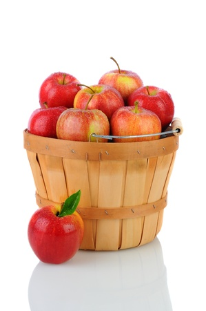 apples basket: A basket full of fresh picked Gala Apples. Vertical format over a white background with reflection. Stock Photo