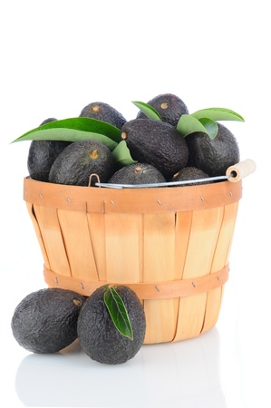 hass: Fresh Picked Hass Avocados in a bushel basket on a white background with reflection.