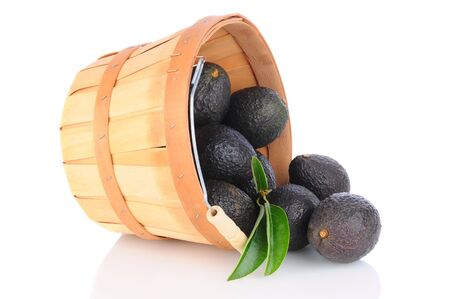 hass: A basket of Hass Avocados tipped over and spilling onto the reflective surface Stock Photo