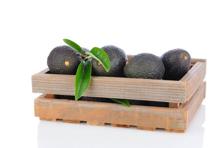 hass: A wooden crate full of Hass Avocados on a white background with reflection Stock Photo