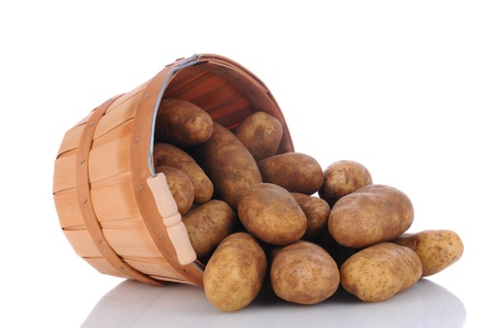 bushel: A basket full of russet potatoes on its side spilling onto a white surface with reflection. Horizontal format.