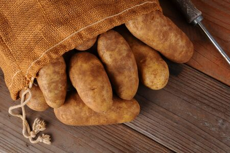 russet: A overhead view of a burlap sack of potatoes on a rustic wooden background. Horizontal format with copy space.