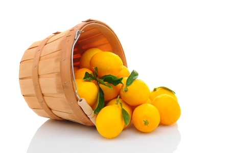 bushel: A basket full of fresh picked lemons on its side with fruit spilling out. Horizontal format isolated on white with reflection.