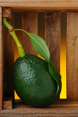 Closeup of a fresh picked avocado with stem and leaf in a wood packing crate. Vertical format with a light to dark warm background showing through the slats of the box. Stock Photo - 18173669