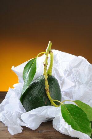 Closeup of a fresh picked avocado with stem and leaf in white tissue paper. Vertical format with a light to dark warm background. Stock Photo - 18589843