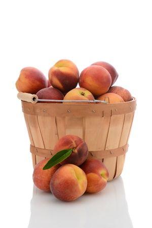 bushel: A bushel basket full of fresh picked yellow peaches, with a stack of loose fruit in front. Vertical format isolated on white with reflection.