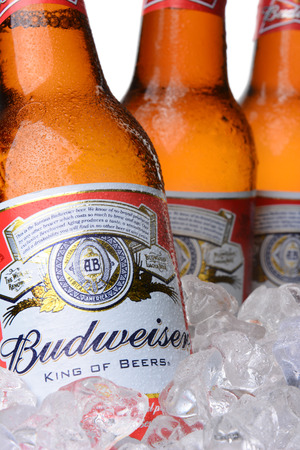 IRVINE, CA - MAY 30, 2014: Closeup of Budweiser beer bottles in ice. From Anheuser-Busch InBev, Budweiser is one of the top selling domestic beers in the United States.