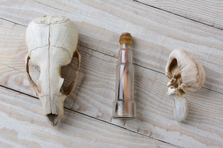 old items: Items found while beach combing in a remote area. A sea lion skull, a whale inner ear bone and a note in a bottle. The items are laid out on a white wood deck.