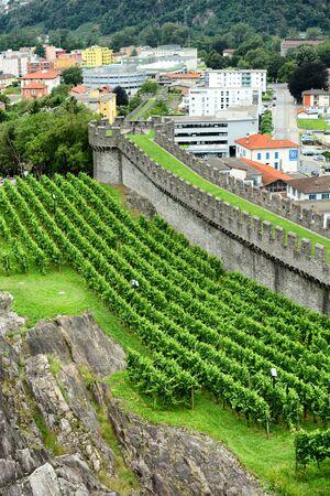 ramparts: BELLINZONA, SWITZERLAND - JULY 4, 2014  Vineyards at Castelgrande, Bellinzona  Grape vines grow alongside the ramparts of the UNESCO World Heritage Site