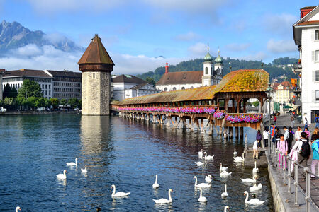 LUCERNE, SWITZERLAND - JULY 2, 2014: Chapel Bridge, swans and Jesuit Church, Lucerne. The wooden covered bridge spans the Reuss River with Mt. Pilauts rising in the background.