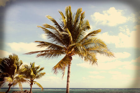 to sway: Coconut Palm Trees sway in the breeze on a tropical beach, on a sunny day with a retro look.