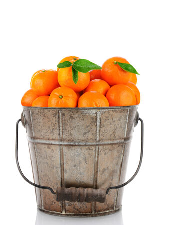 reticulata: A, antique metal bucket full of Clementine Mandarin Oranges. Vertical format over a white background with reflection.