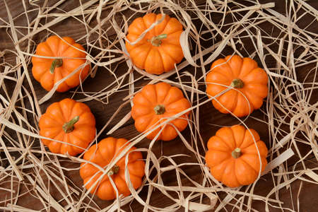 high angle shot: A group of mini pumpkins on a wood rustic table scattered with straw. High angle shot in horizontal format.