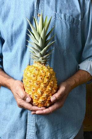 vertical format: Closeup of a man holding a homegrown pineapple in front of his torso. The person is wearing a blue work shirt and is unrecognizable. Vertical format.
