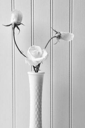 Closeup of white roses in a milky vase against a white beadboard background. Vertical format in Black and White. photo