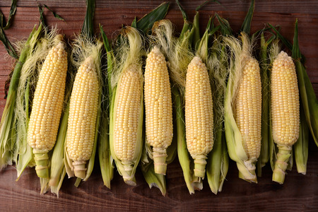 shucked: Several fresh picked and shucked corn on the cob ears on a rustic wood table. The sweet corn is shot from a high angle in horizontal format. Stock Photo