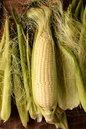 shucked: A partially shucked ear of fresh picked corn on the cob. Surrounded by silk and husk in vertical format.