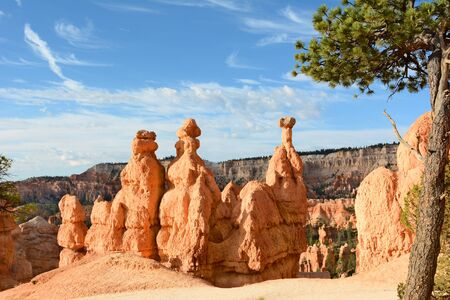Horizontal shot of a Bristlecone Pine tree and Hoodoos along the Queens Garden Trail in Bryce Canyon National Park.