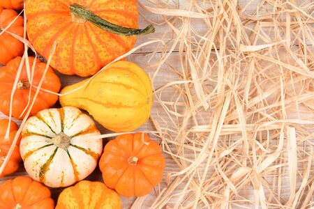 high angle: Overhead view of Ornamental gourds and pumpkins on a white rustic table with straw and copy space. Stock Photo
