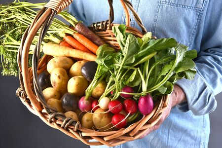 baskets: Closeup of a farmer holding a basket filled with fresh picked local grown organic vegetables. Carrots, potatoes, and radishes.