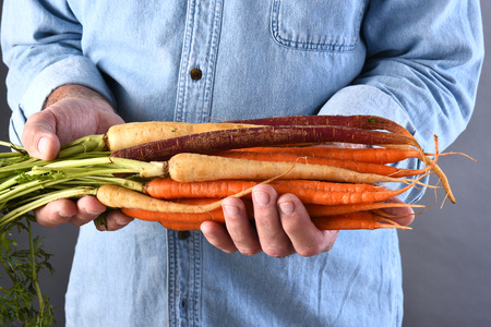 grown: Closeup of a farmer holding his fresh picked local grown organic carrots. Horizontal format. Stock Photo
