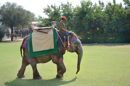 dera: JAIPUR, INDIA - NOVEMBER 13, 2015: Dera Amer Elephant Safari Elephant Polo. The camp is run by a local family and operates out of their ancestral home.