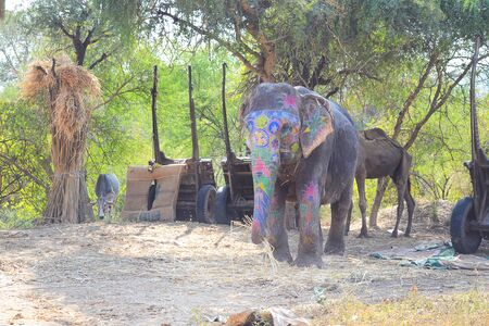 dera: JAIPUR, INDIA - NOVEMBER 13, 2015: Painted elephant and rider at Dera Amer Elephant Safari. The camp is run by a local family out of their ancestral home.