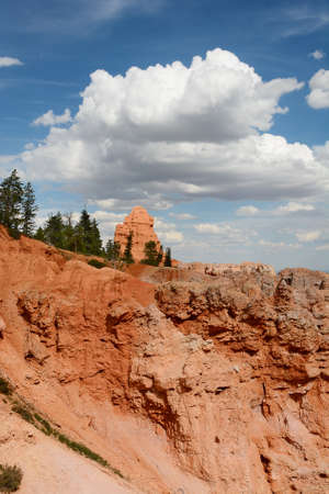 bristlecone: Bryce Canyon National Park vertical landscape with white clouds and blue sky.