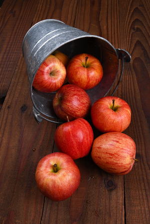 galvanized: Fresh picked Gala Apples spilling from a metal bucket onto a rustic wood table.