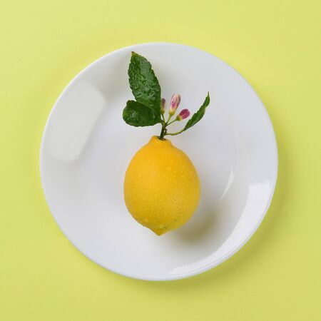 yellow stem: Fresh picked lemon with stem and flowers on a white plate and yellow background. High angle shot in Square format.